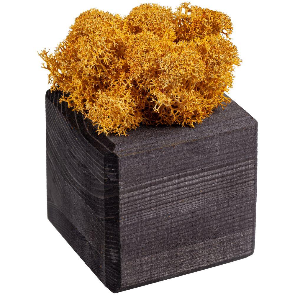 Декоративная композиция GreenBox Black Cube, желтый